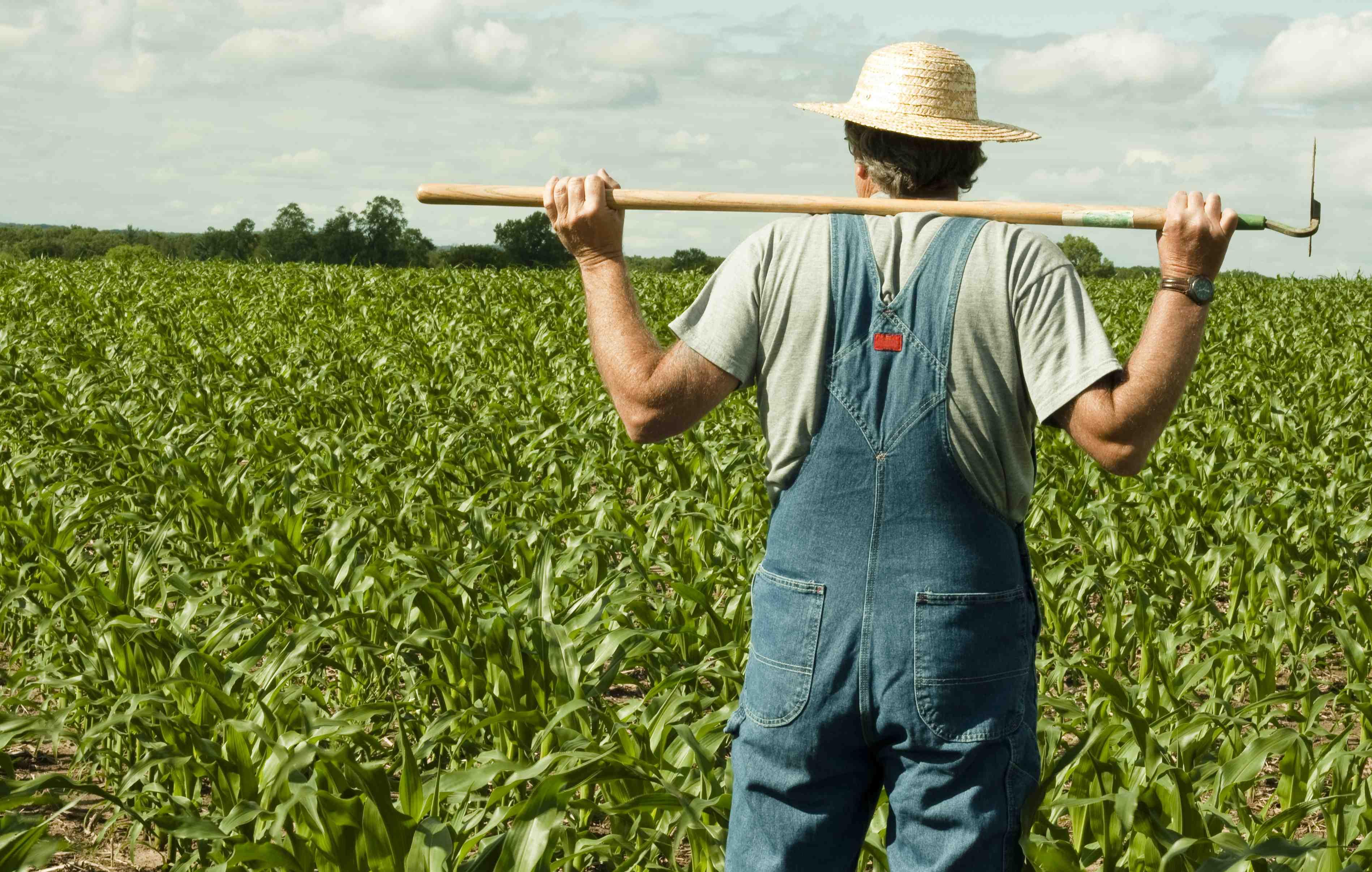 farmer thinking lr