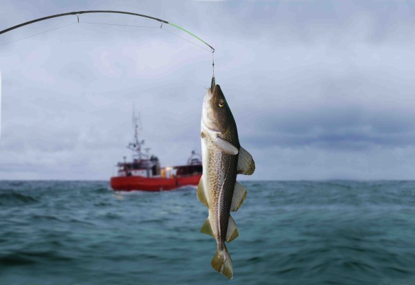 fish hoock lr