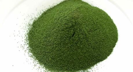 Chlorella 1