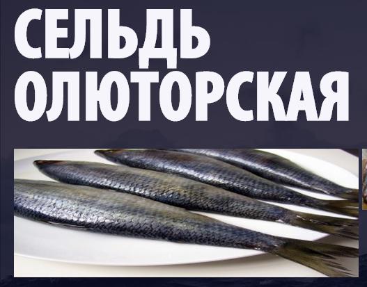 seld olytorskaya seafoodshop