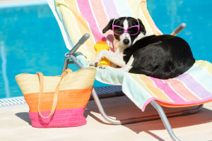 Dog in sun glasses near the pool