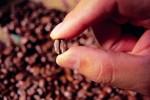hand holding coffee bean