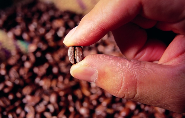 hand holding coffee bean