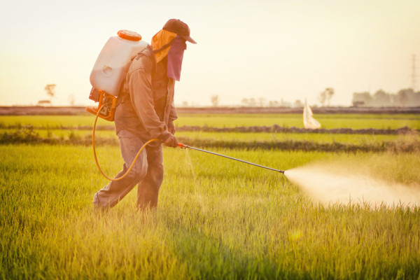 Pesticide man spraying the field grass