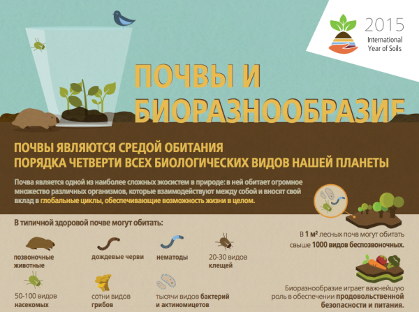 Soil pochva screenshot infografika