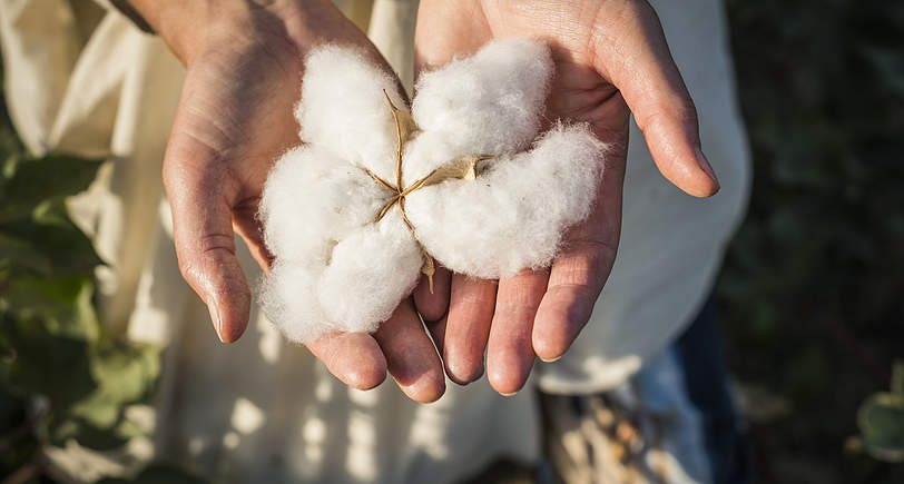 Organic Cotton Production