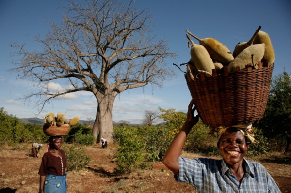 фото: feedthefuture