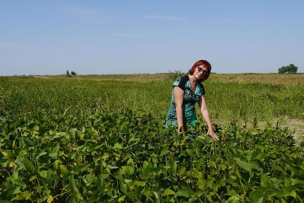 Светлана Березовская на поле сои