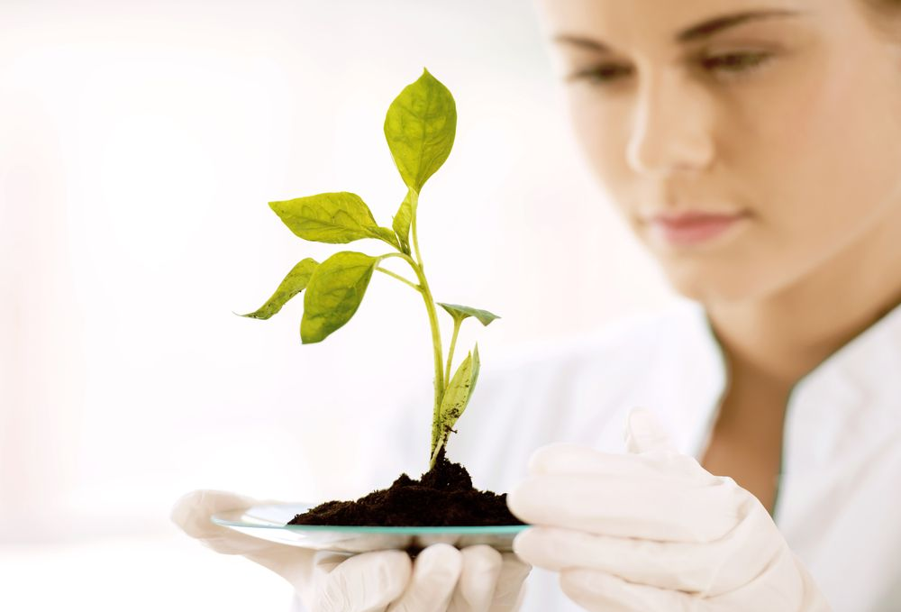 scientists examine plant