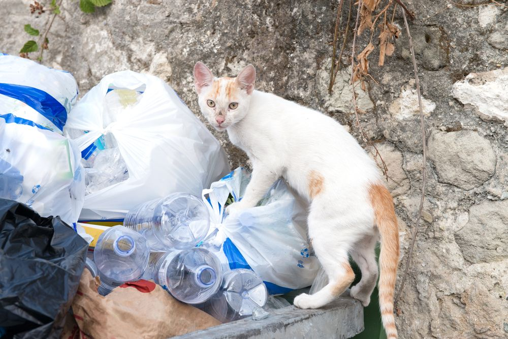 cat plastic bags rubbish