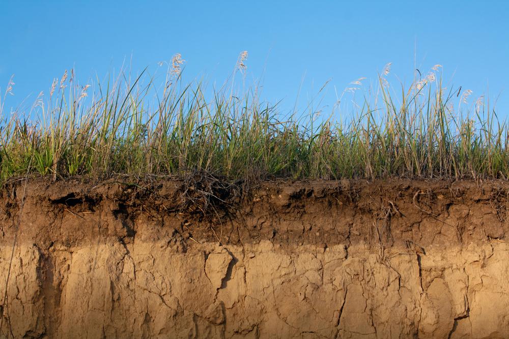 почва, как она есть