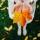 Ревизия: Осенние кремы для рук, часть 3