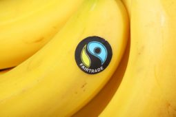 imported-bananas-bearing-the-fairtrade-foundation-sticker