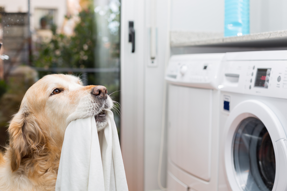Retriever dog near washing machine sobaka stirka uborka clean dust wash