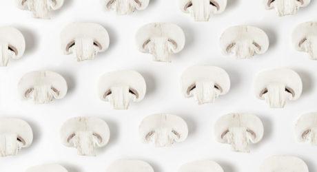 Champignon mushroom white minimalism