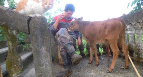 2013 год - котенок Рыжик и теленок Бобер (Бобер уже давно вырос и мы сдали его на мясо, а Рыжик недавно пропал, шакалы съели его наверное)