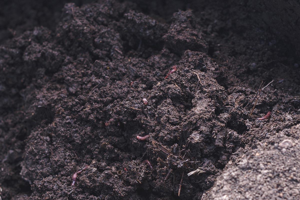 готовый вермикомпост - один из природных механизмов для улучшения почвы и повышения урожайности в органик-земледелии