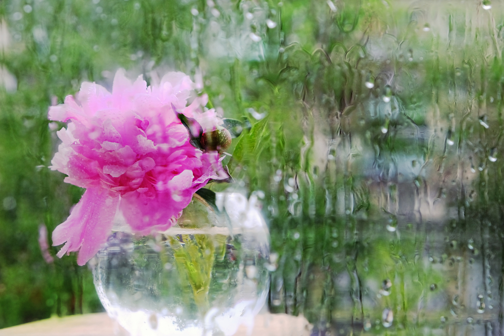 window flower rain summer