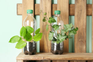 Plants in plastic bottles