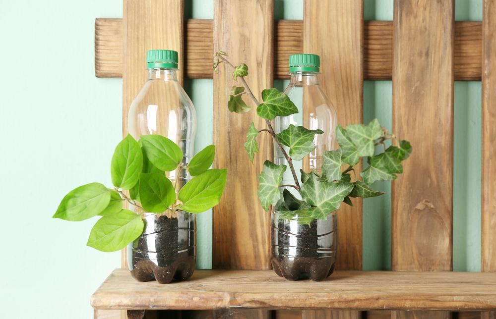 Plants in plastic bottles