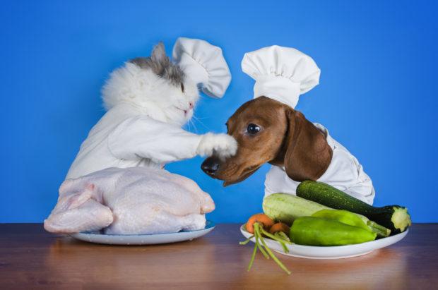 veg cat dog