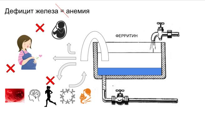 deficit zheleza zhelezo ferritin arseneva anemiya