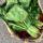 Сумка со шпинатом против пластикового равнодушия