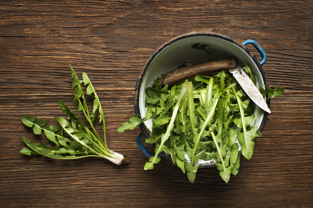 jduvanchik list zeleniy nozh miska