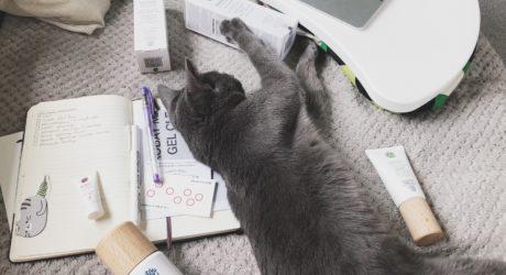 (Мой бьюти помощник тоже выбрал любимчиком матирующий гель, точнее, коробку от него. Кошки же!)